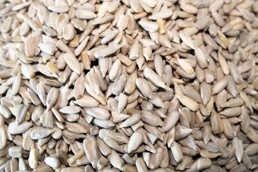 Raw Shelled Sunflower Seed Kernels Close up