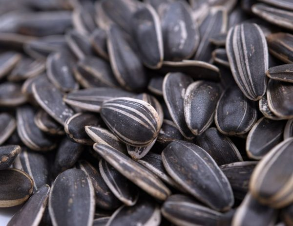 Sea Salted Dry Roasted In Shell (whole) Sunflower Seeds Close up